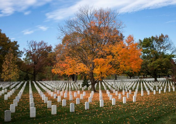 A tree sheds fall leaves on Veterans Day, Friday, Nov. 11, 2016, at Arlington National Cemetery.